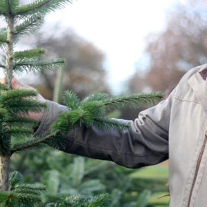 Man holding Christmas tree