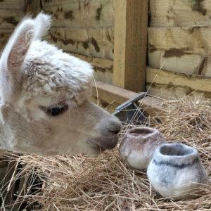 Alpaca with 2 wool bowls